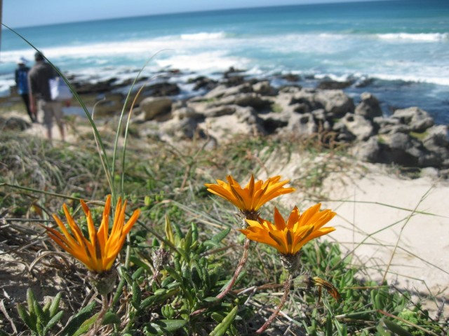 De Hoop Nature Reserve (C) Rambling with Rose (204)