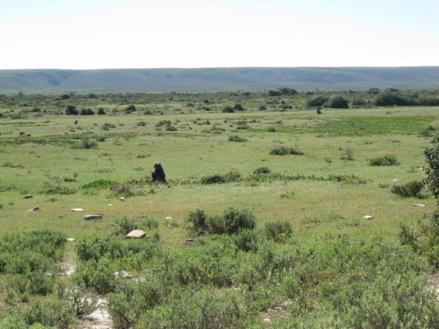 De Hoop Nature Reserve (C) Rambling with Rose (301)