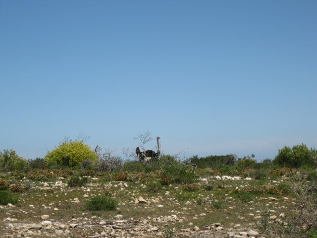 De Hoop Nature Reserve (C) Rambling with Rose (307)