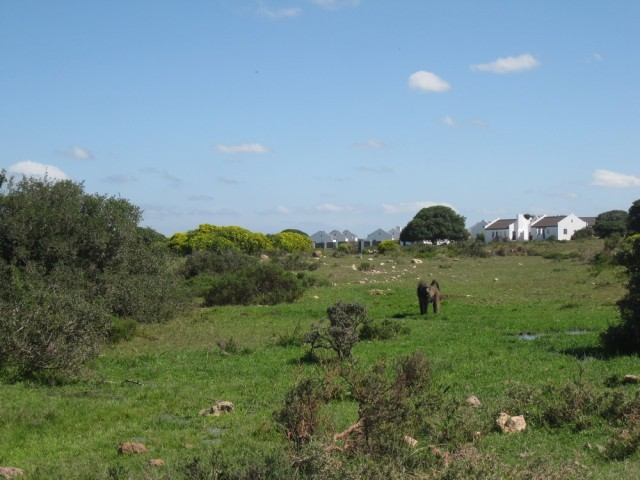De Hoop Nature Reserve (C) Rambling with Rose (312)