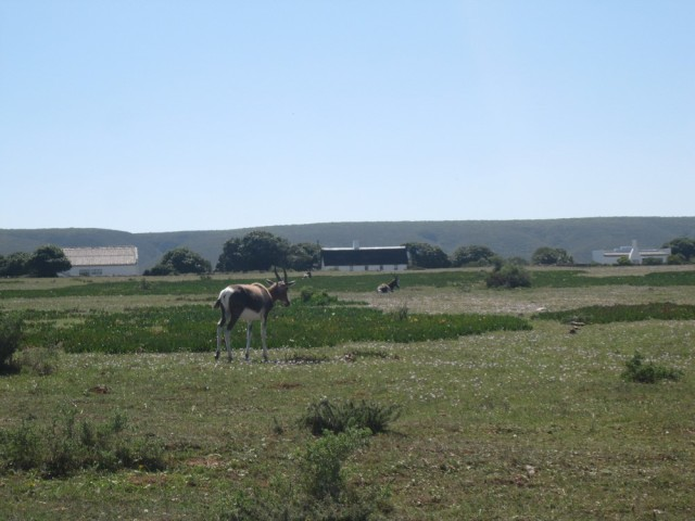 De Hoop Nature Reserve (C) Rambling with Rose (319)
