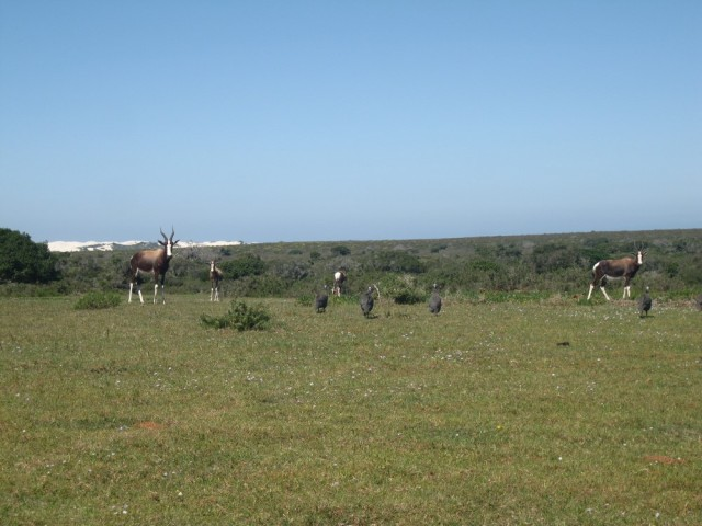 De Hoop Nature Reserve (C) Rambling with Rose (335)